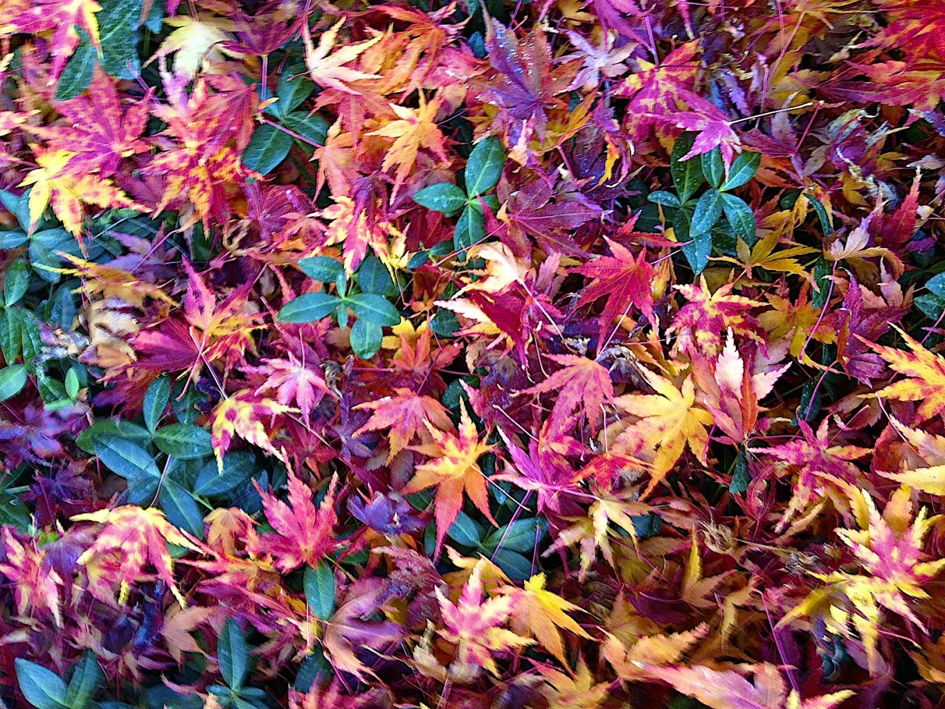 Sedona Fall Color – What You Should Know About ~ Leave Cleanup
