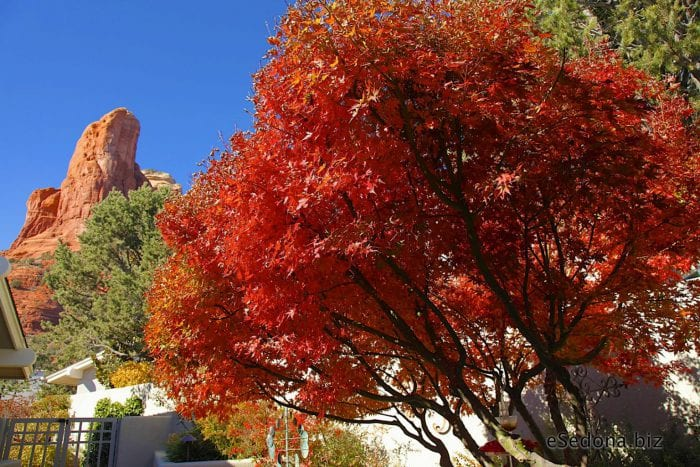 Fall Color Sedona