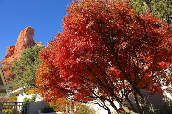 Fall Color Sedona Style! Thanksgiving Color is Here