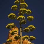 Sedona landscape photography