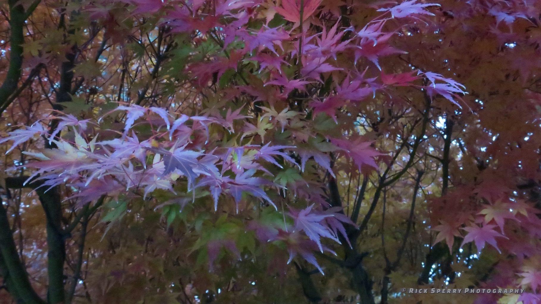 Fall in Sedona