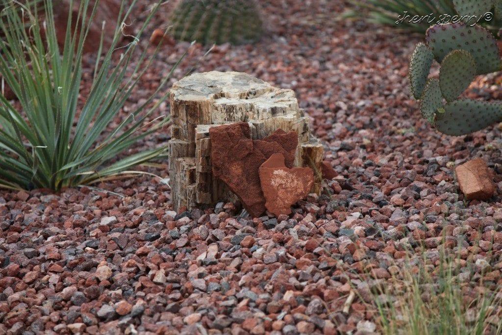 Petrified Forrest Arizona Rock - Sedona