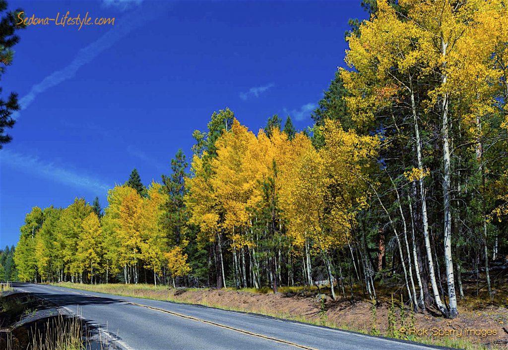 sedona weather - Fall Aspens Flagstaff