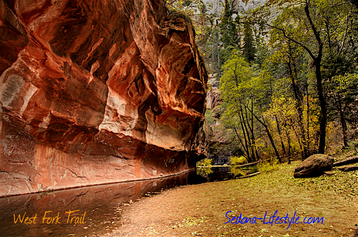fall color - West Fork Trail - Sedona Sheri Sperry Coldwell Banker\