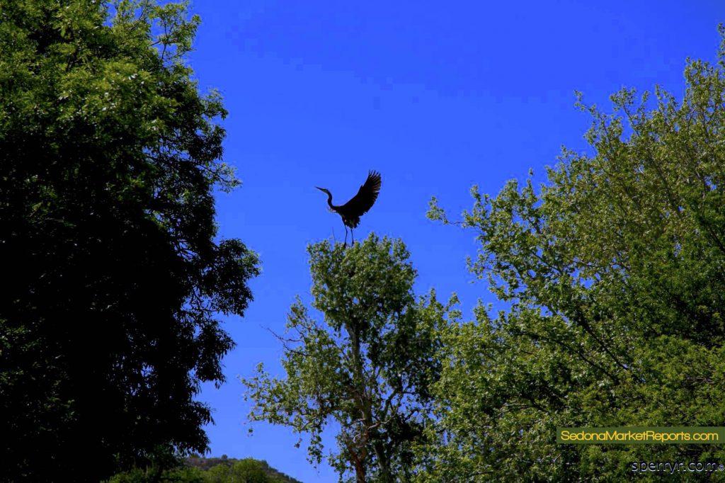 Audubon Page Springs important birding area