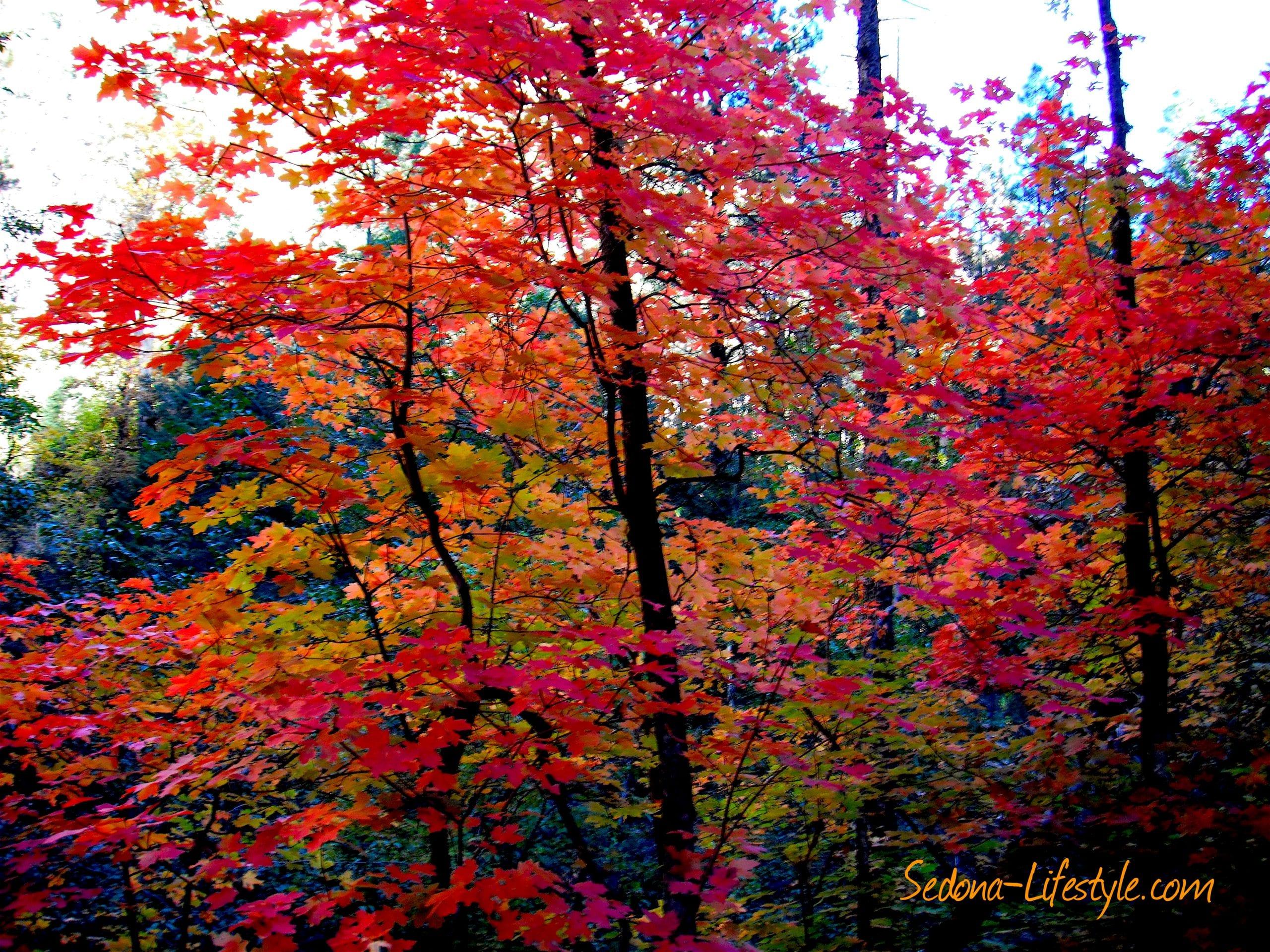 Fall - West Fork Oak Creek Canyon