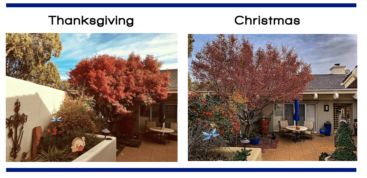 Compare holidays for Japanese Maple