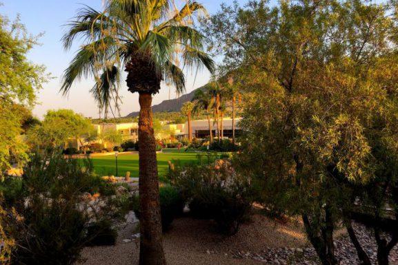 Camelback Inn – Sonoran Desert Flora