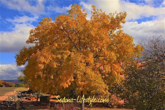 Sedona Fall Color – Two Not So Secret Hiking Locations! Flagstaff – Aspens and Sedona – West Fork