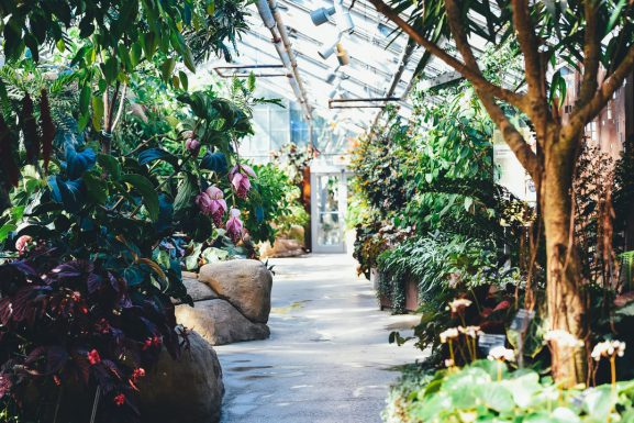 Growing an Indoor Garden in the Fall and Winter Months